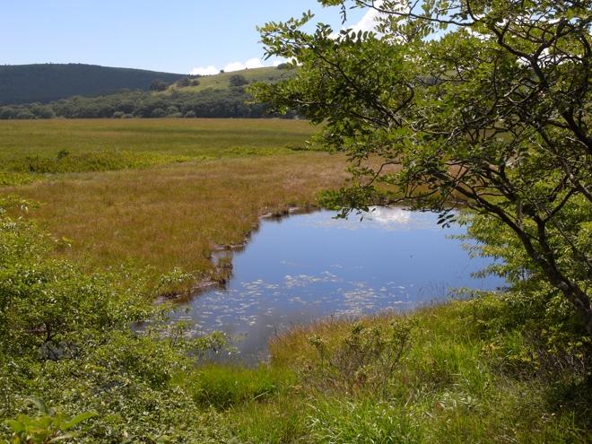 八島湿原の池塘