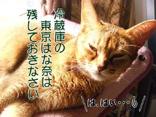 20100814_03.jpg