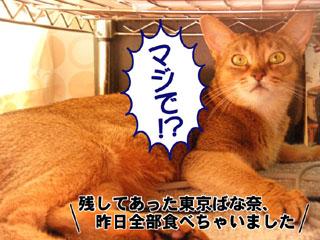 20100815_02.jpg