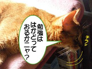 20100816_02.jpg