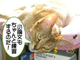20100816_03.jpg