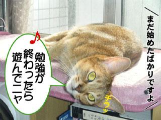 20100816_04.jpg