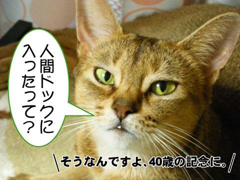20100819_01.jpg