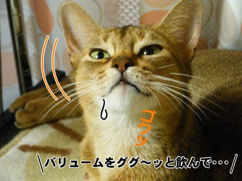 20100819_02.jpg