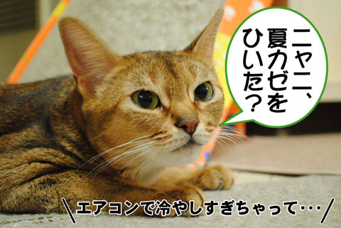 20100821_01.jpg