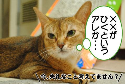 20100821_02.jpg