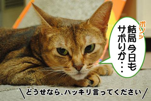 20100821_03.jpg