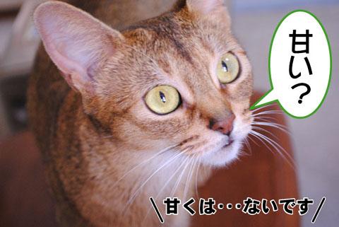 20100826_02.jpg