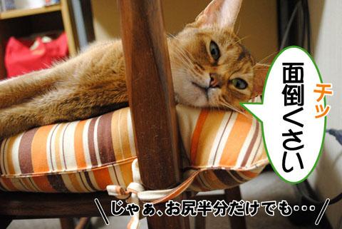 20100831_02.jpg