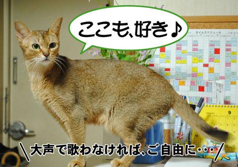 20100923_02.jpg
