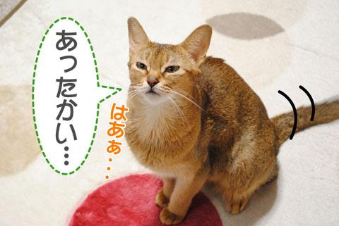 20101006_01.jpg