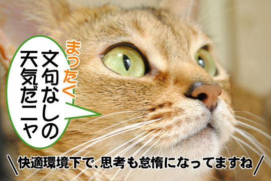 20101029_02.jpg