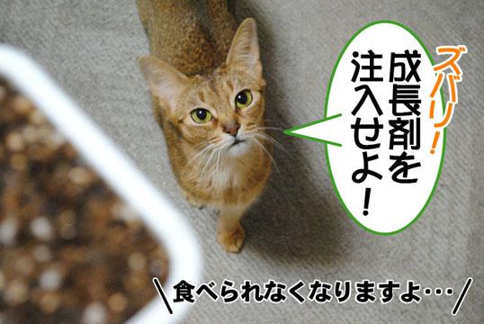 20101101_02.jpg
