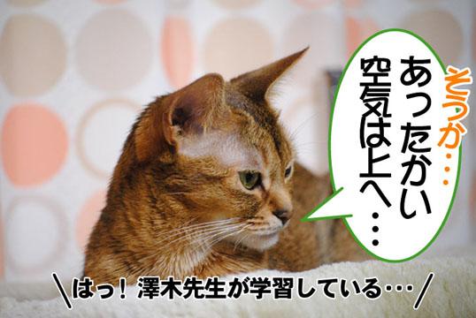 20101103_01.jpg