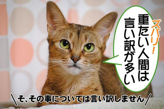 20101103_03.jpg