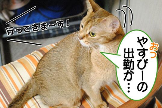 20101108_01.jpg