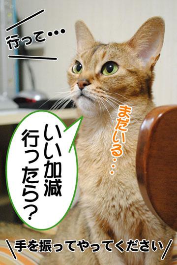 20101108_04.jpg