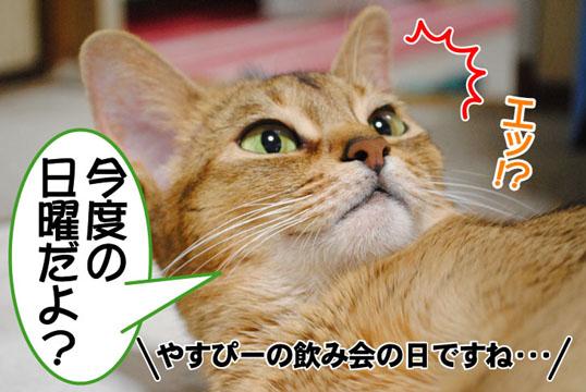 20101110_02.jpg