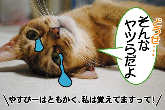 20101110_03.jpg