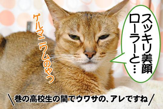 20101115_03.jpg