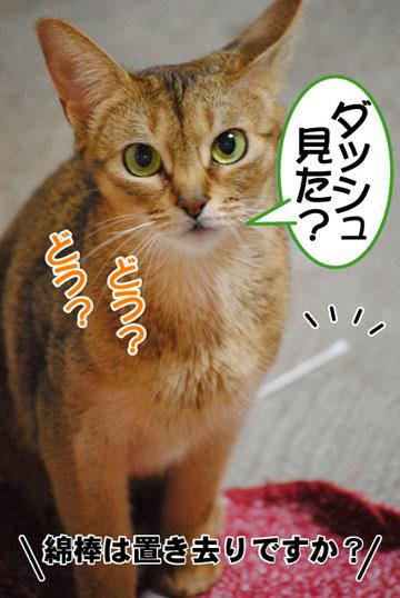 20101122_03.jpg