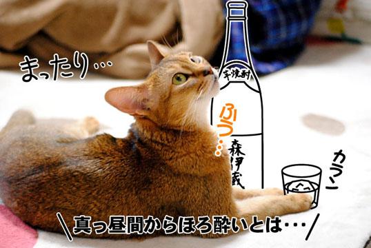 20101123_01.jpg