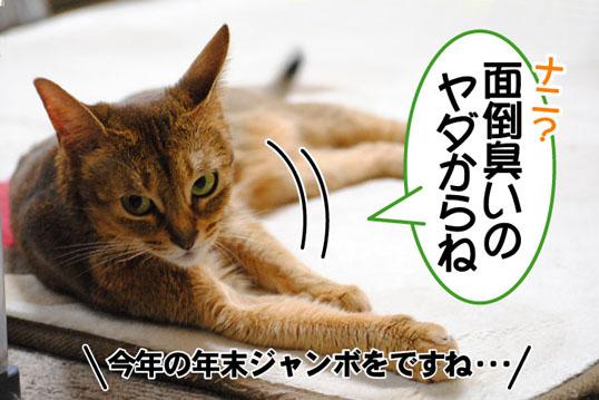 20101124_01.jpg