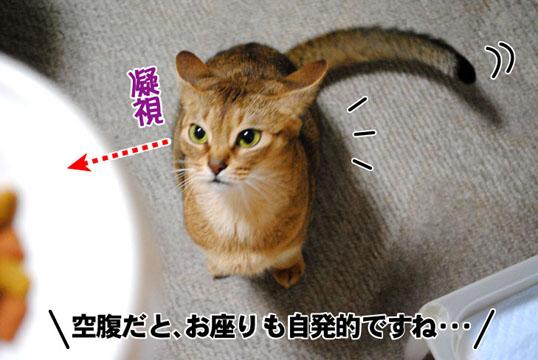 20101127_02.jpg