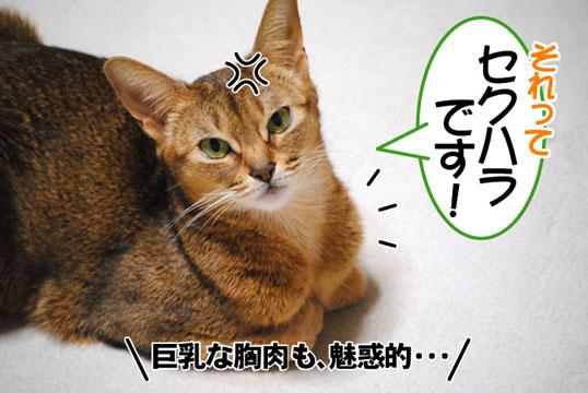 20101129_04.jpg