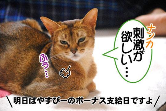 20101209_01.jpg