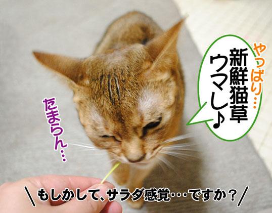 20101213_02.jpg