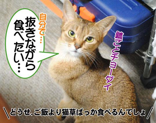 20101213_04.jpg