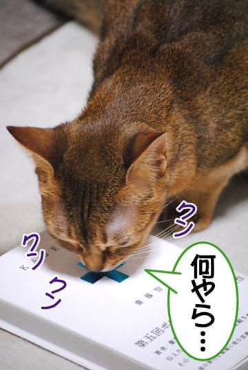 20101217_02.jpg