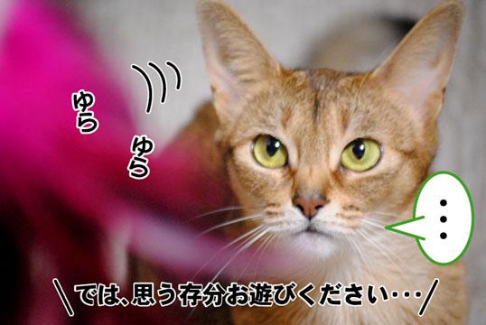 20101219_02.jpg