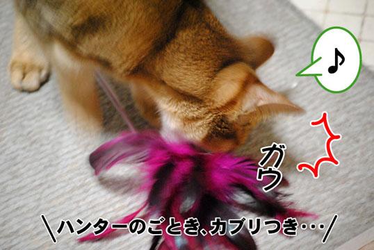 20101219_03.jpg