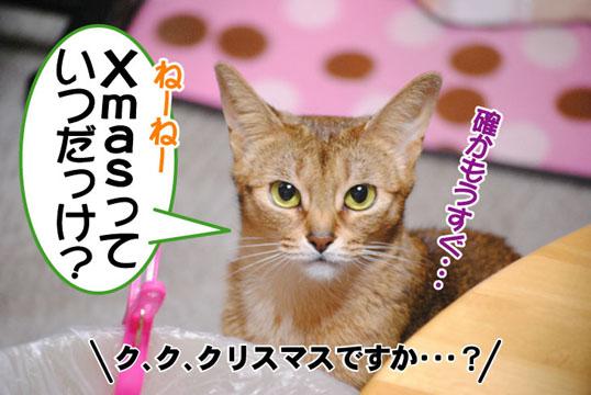 20101221_01.jpg