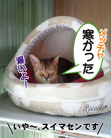 20101226_01_01.jpg