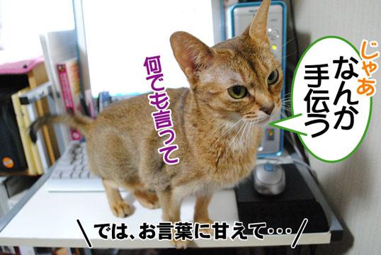 20110108_03.jpg