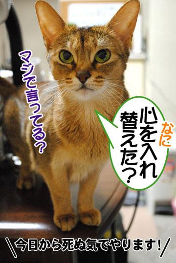 20110114_01.jpg