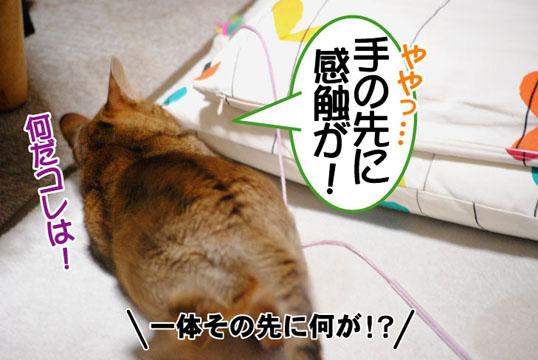 20110119_02.jpg