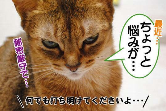 20110122_01.jpg