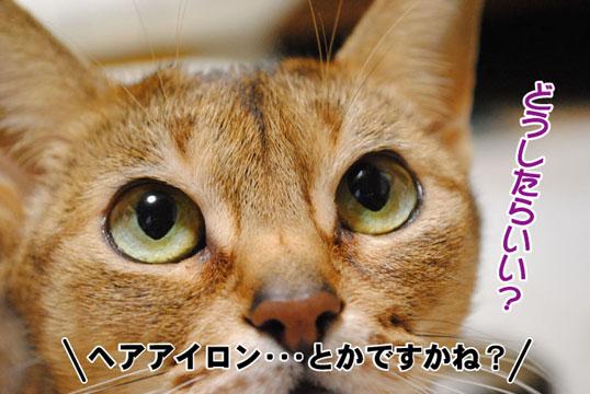20110122_03.jpg