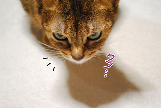20110125_01.jpg