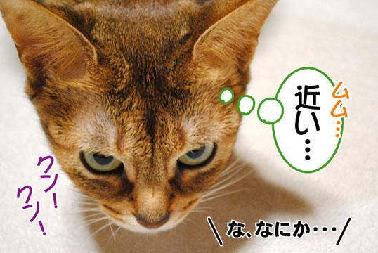 20110125_02.jpg