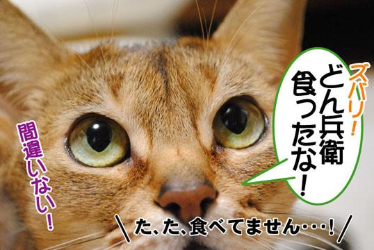 20110125_03.jpg