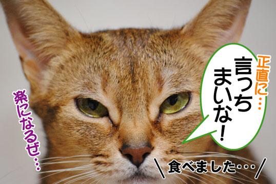 20110125_04.jpg