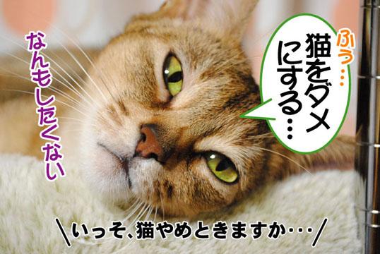 20110126_02.jpg