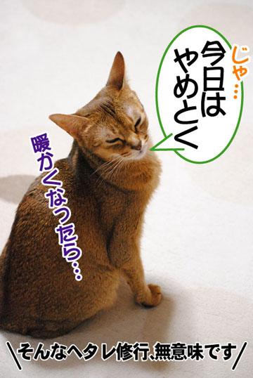 20110130_02_02.jpg