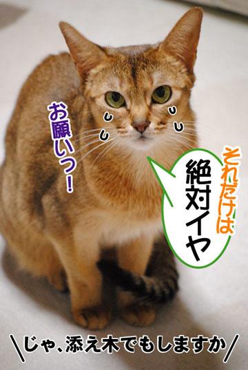 20110209_03.jpg