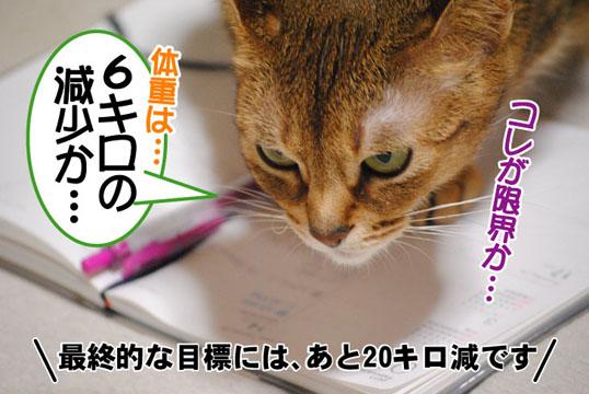 20110216_03.jpg